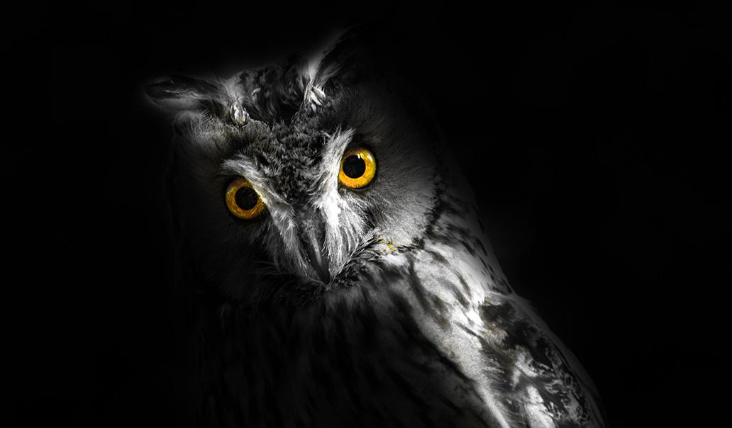 night owl trading